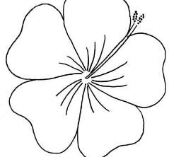 Hibiscus From Moana Disney Coloring Page
