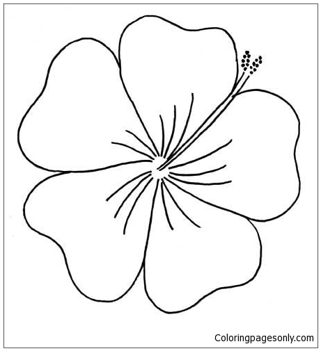 Hibiscus From Moana Disney Coloring Pages