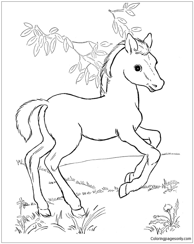 Baby Horse Coloring Page - Free Coloring Pages Online