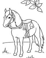 Horse Cute 3