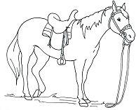 Horse Cute 6