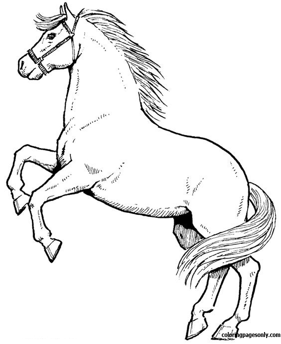 Horse Jumping Coloring Page Free Coloring Pages Online