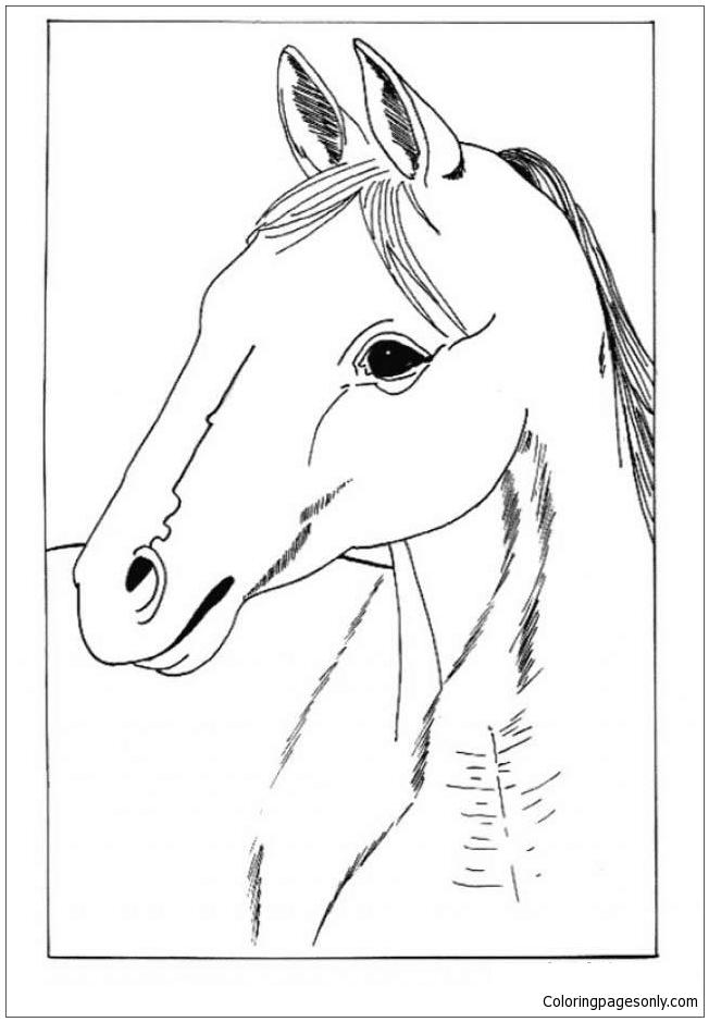 Horse Portrait Coloring Page