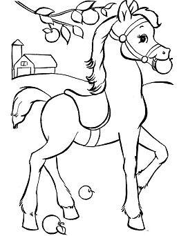 Horses cute