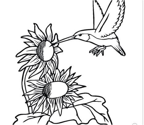 Hummingbird With Sunflowers