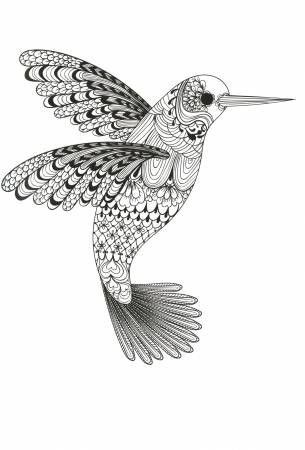 Beauty Of Hummingbird Coloring Page