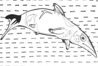 Ichthyosaur Prehistoric Sea Creature