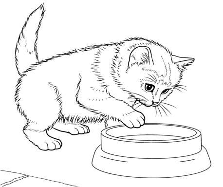 Javanese Kitten