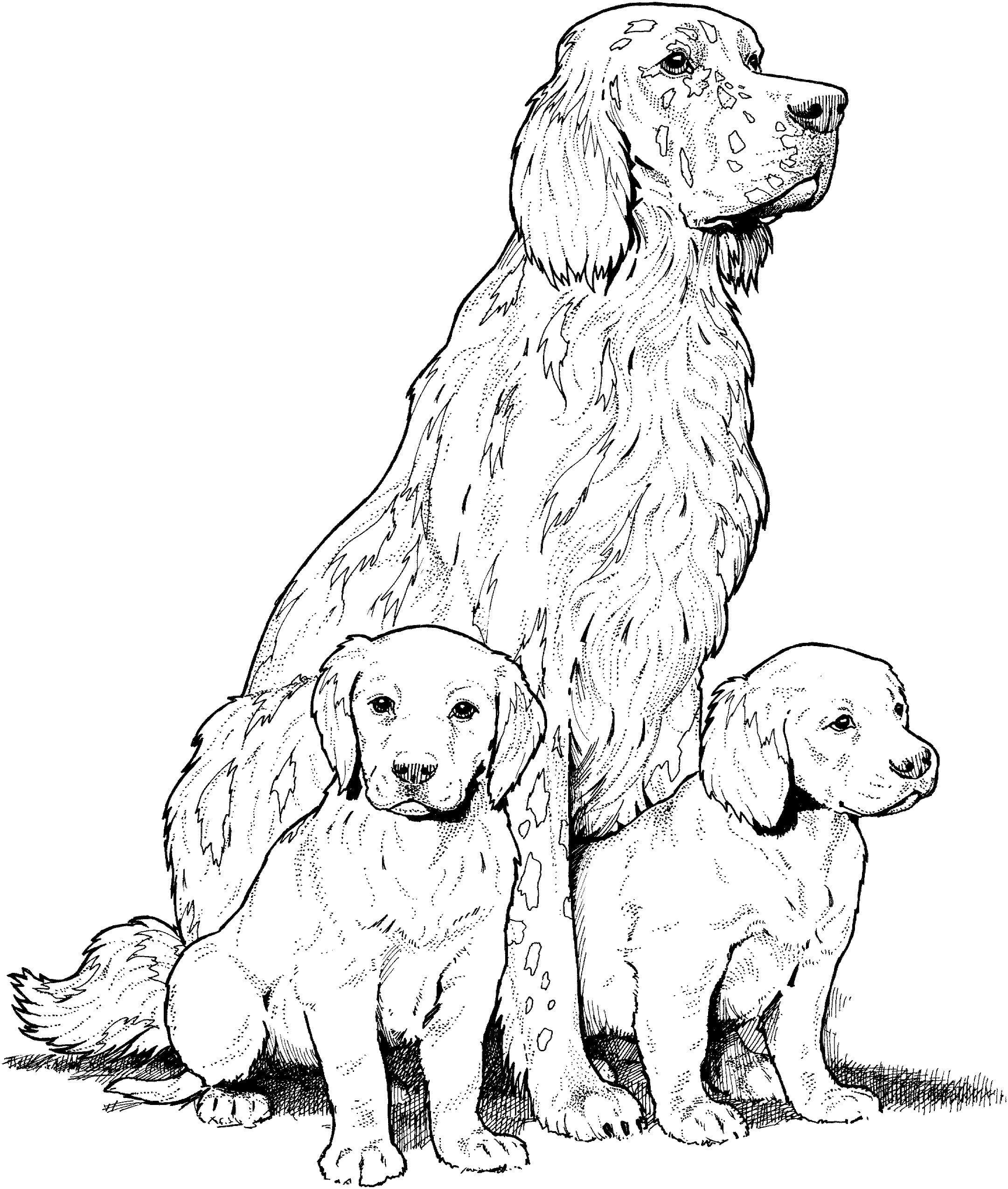Labrador with Puppies Coloring Page