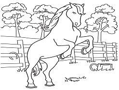 Last Chance Horse