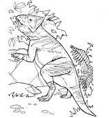 Leptoceratops Ceratopsian Dinosaurs