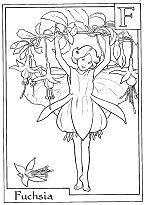 Letter F For Fuchsia Flower Fairy