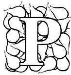 Letter P is for Pear Coloring Page