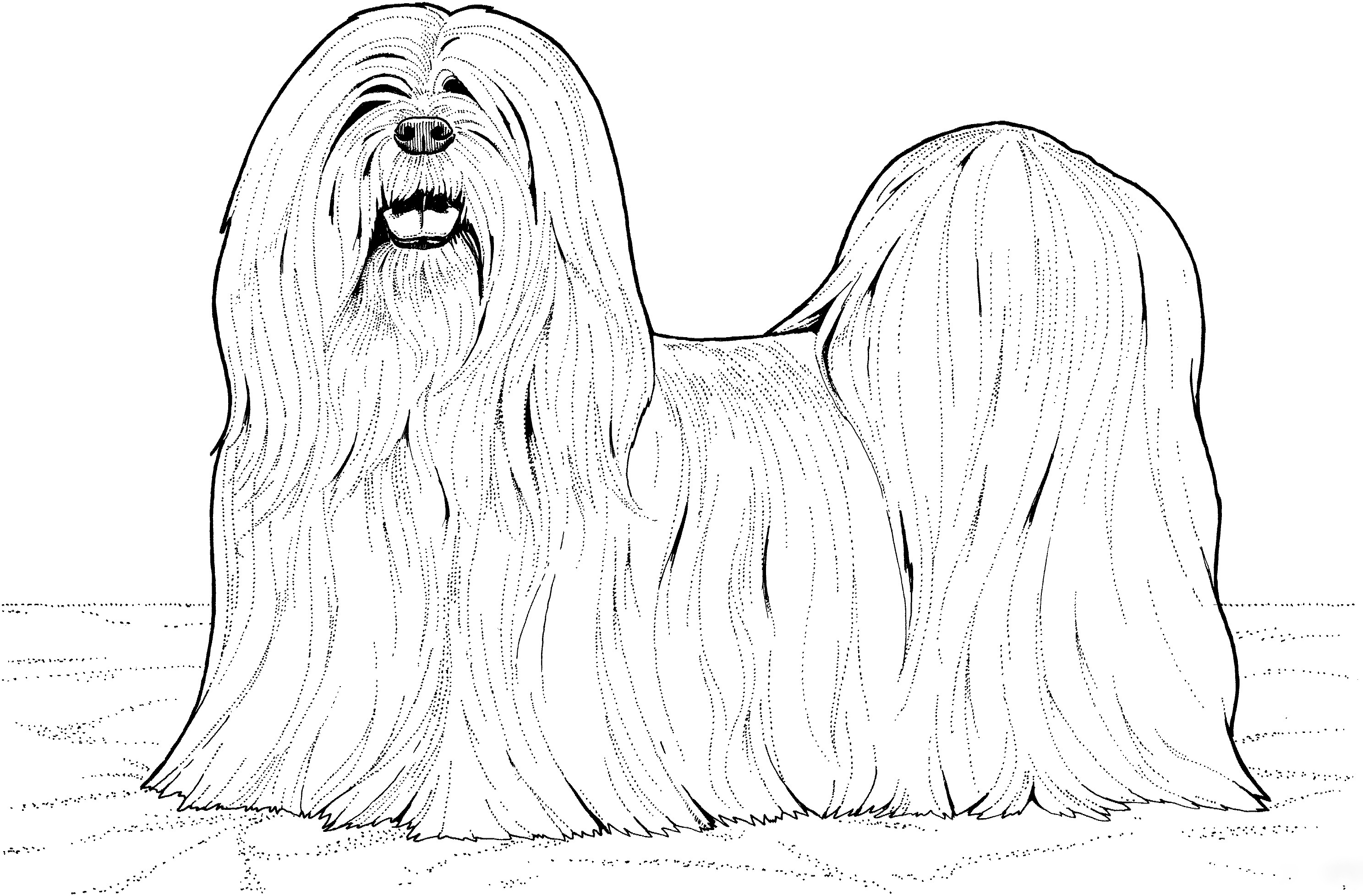 Lhasa Apso Details Coloring Page