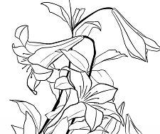 Lilies by Katsushika Hokusai