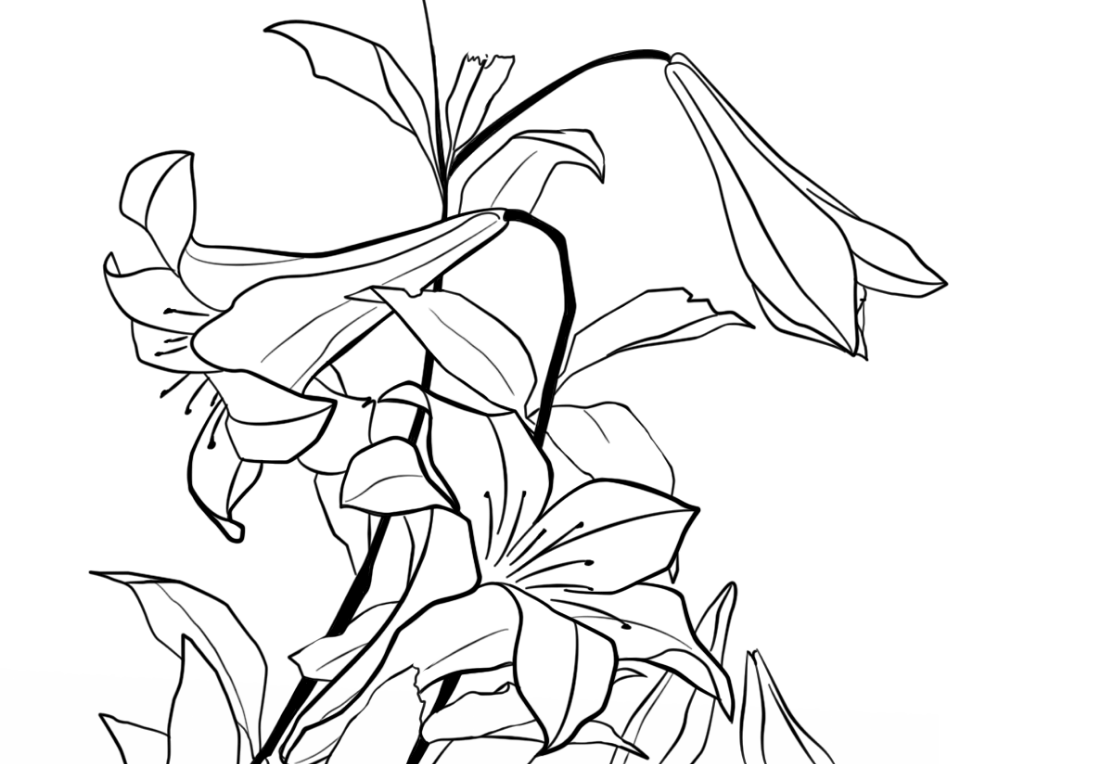 Lilies by Katsushika Hokusai Coloring Pages