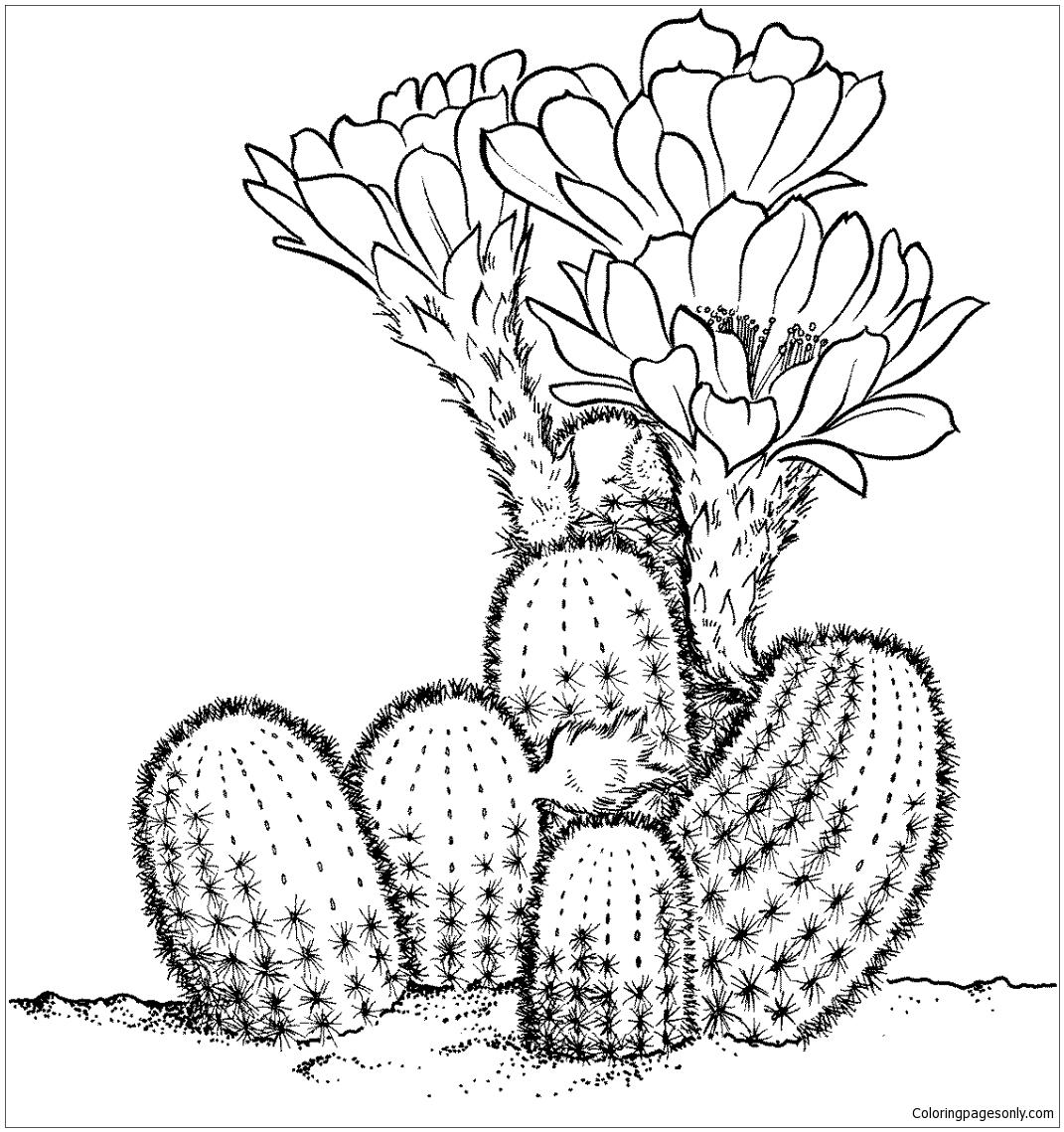 Lobivia Famatimensis Cactus Coloring Page