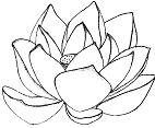 Lotus Flower Mandala 2