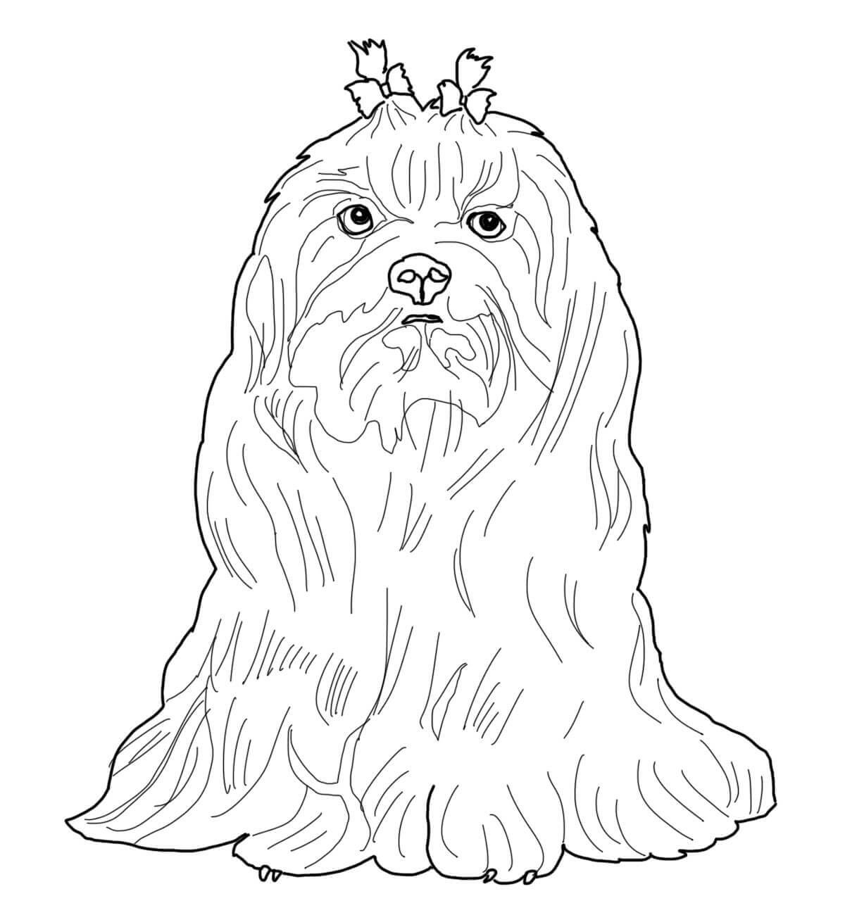 Maltese dog Coloring Page