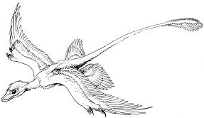 Microraptor Gliding Coloring Page