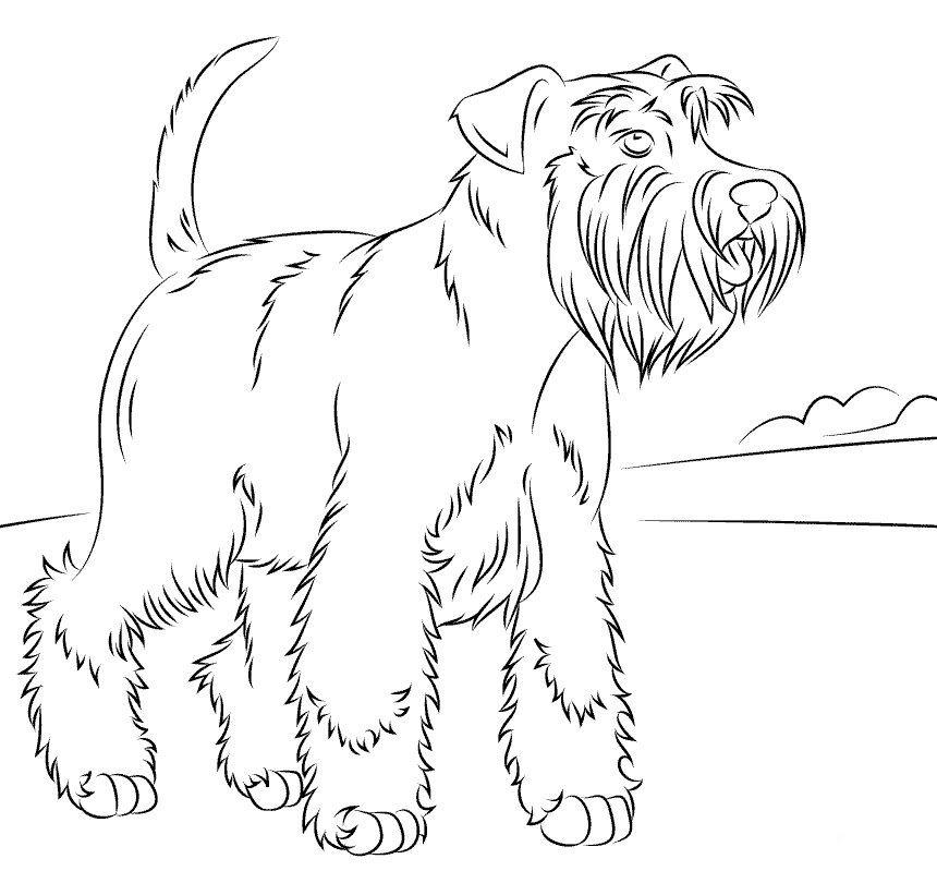 Miniature schauzers Coloring Page
