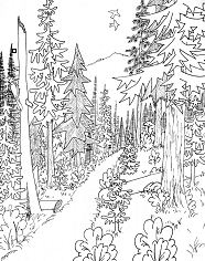 Mixed Conifer Forest Coloring Page