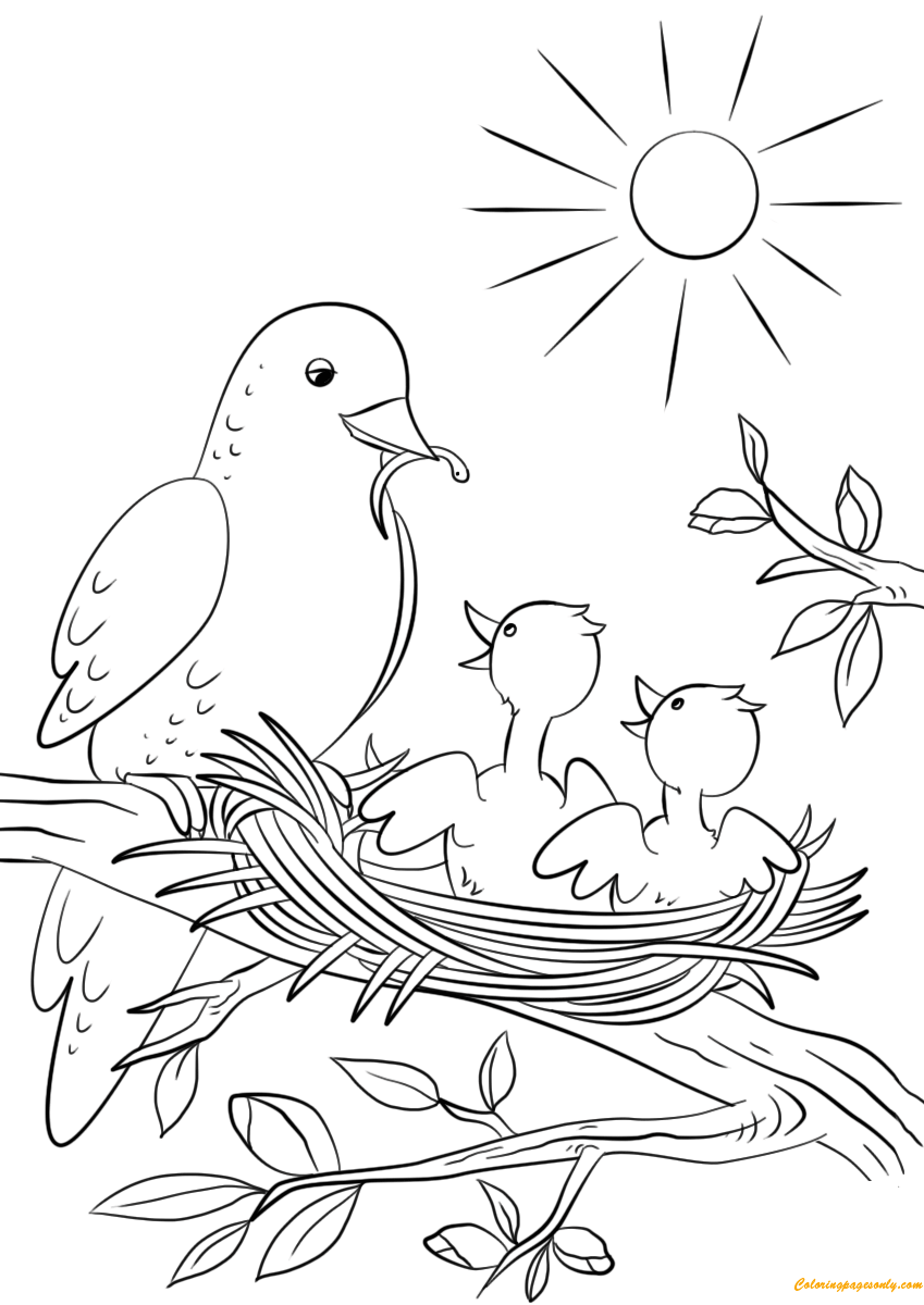 Mother Bird Feeding Two Babies Coloring Page Free