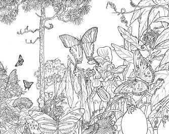 Forest Landscape Coloring Page Free Coloring Pages Online