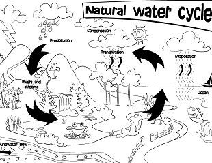 Natural Water Cycle Coloring Page