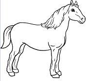 Nice Horse 1
