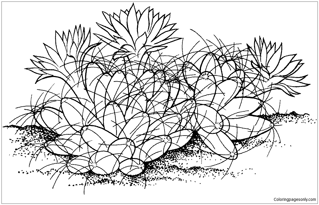 Nipple Cactus Coloring Page Free