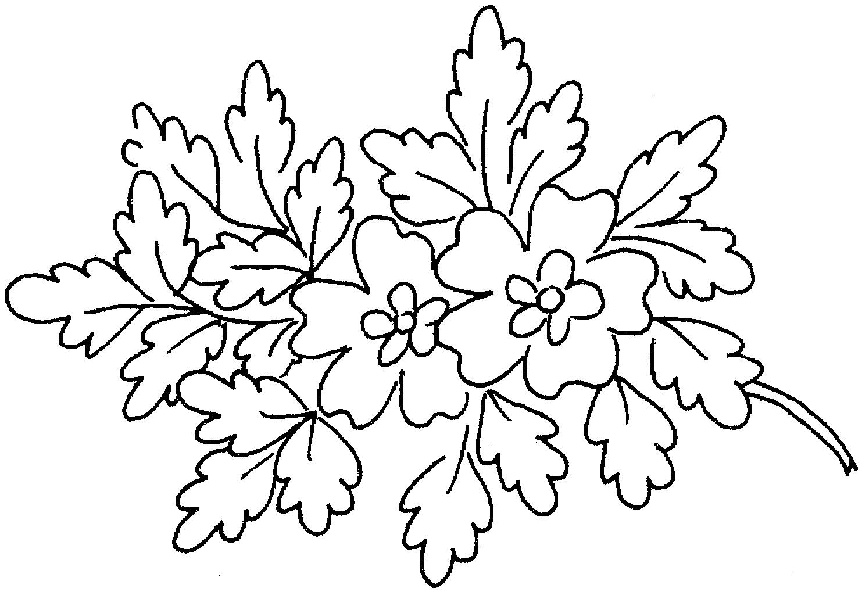 Oak Blossoms Coloring Page