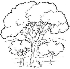 Oak Tree in the Forest Coloring Page