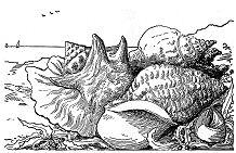 Ocean Animals Coloring Page