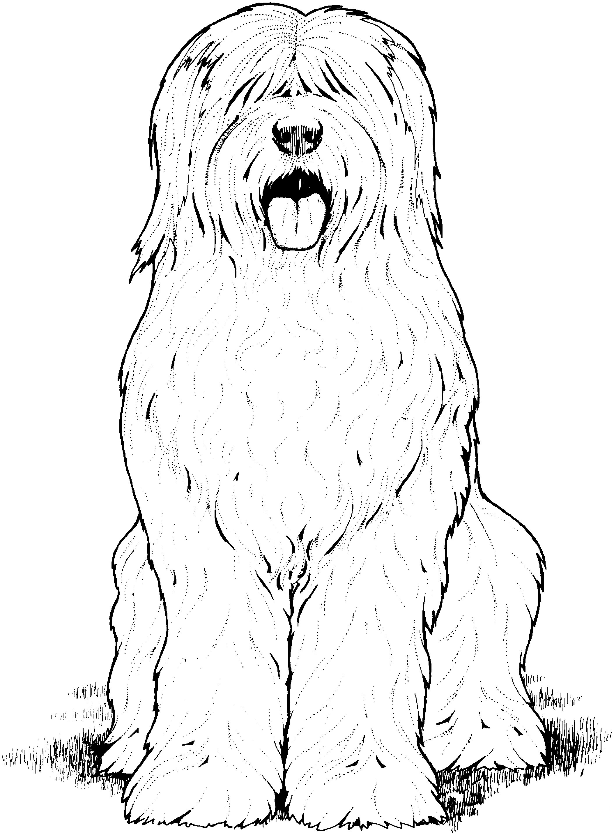 Old English Sheepdog Coloring Page