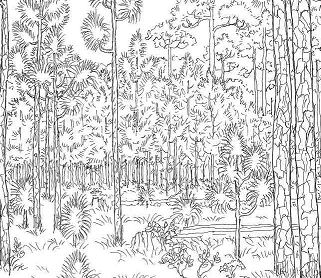 Old Forest Coloring Page