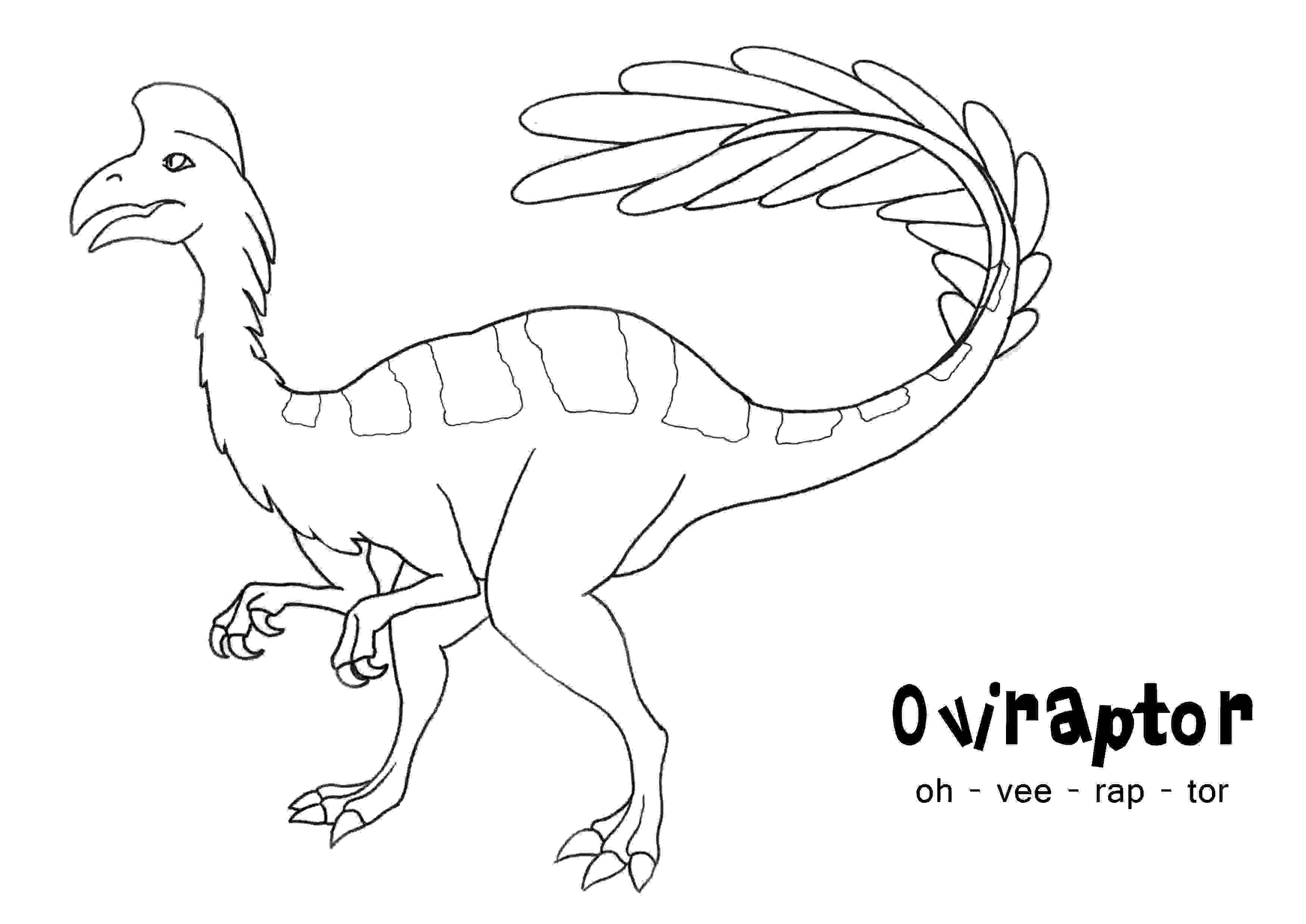 Oviraptor is genus of feather dinosaur of Archaeopteryx type