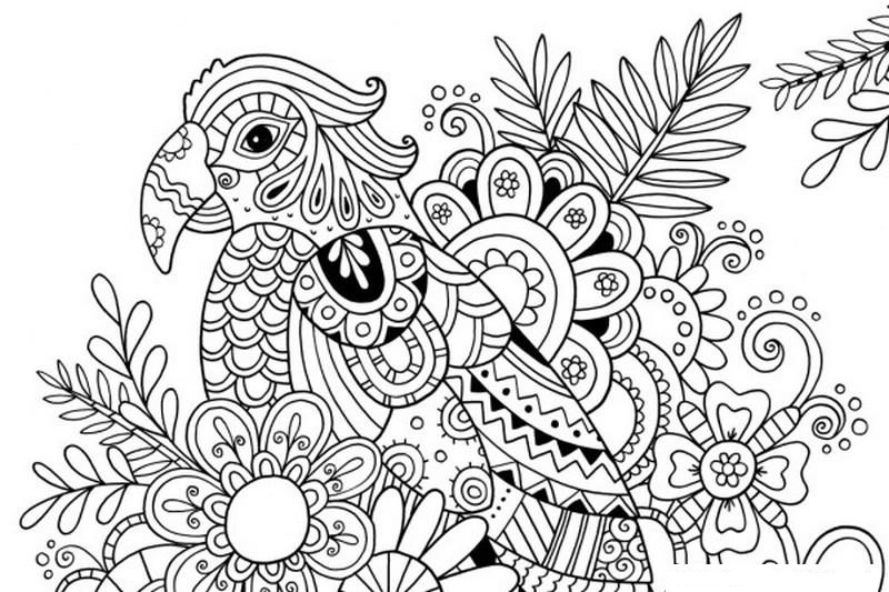 Parrot with Summer Flower Coloring Page