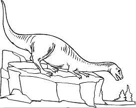 Plateosaurus 11