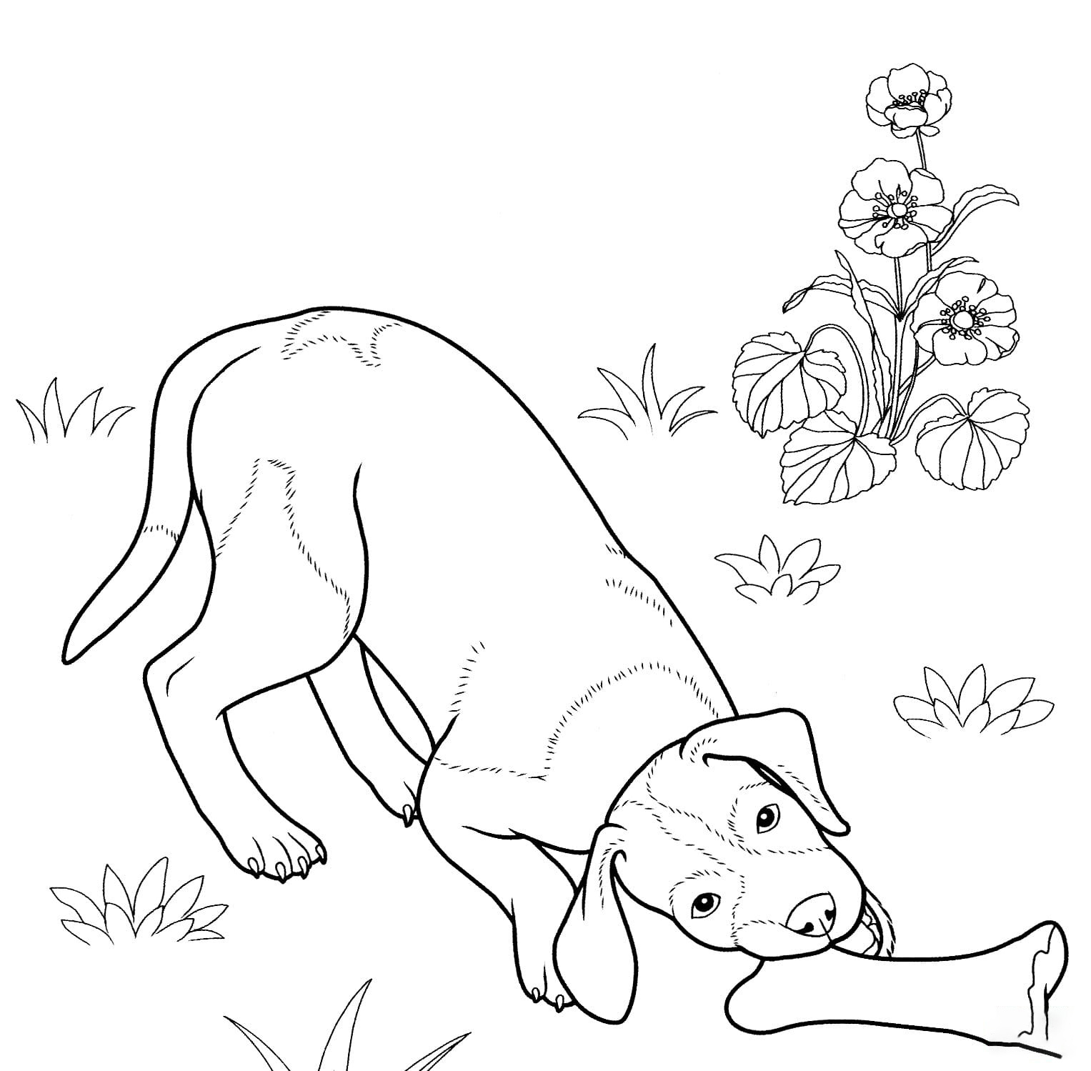Pointer Coloring Page