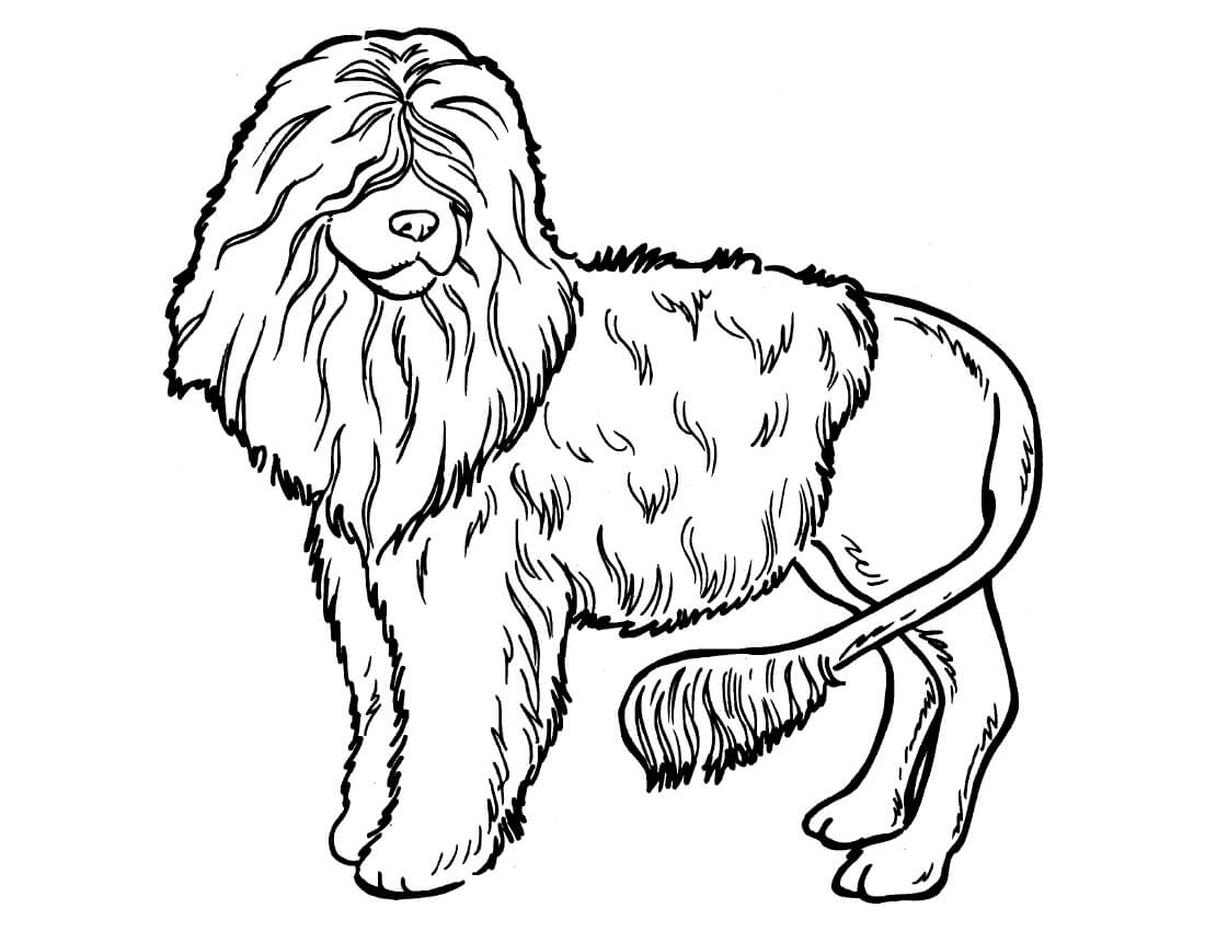 Poodle Dog Coloring Page