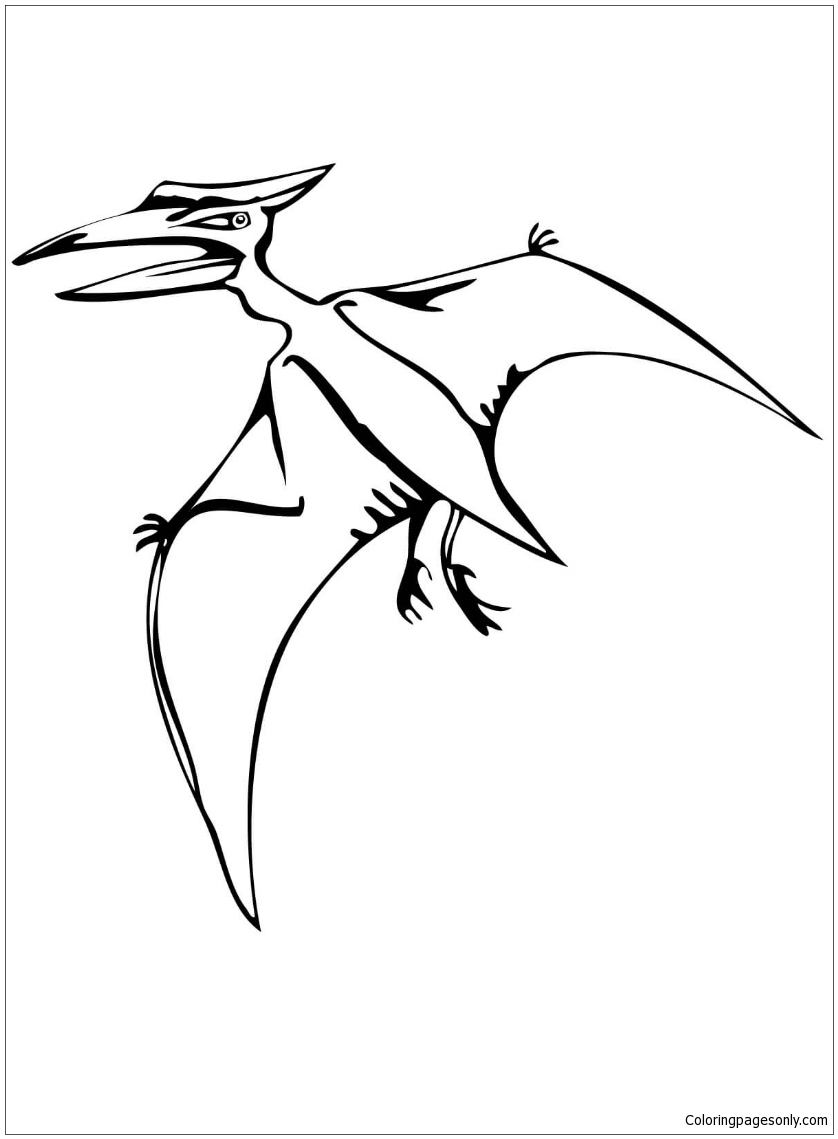Pteranodon Flying Reptile Coloring Page