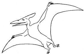 Pteranodon Spread His Wing Coloring Page