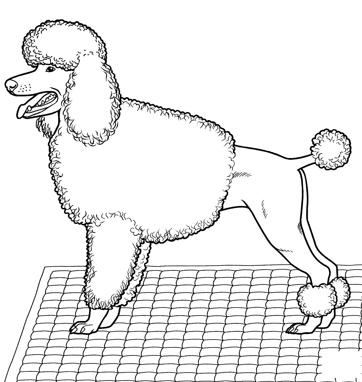 Pudel Coloring Page
