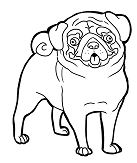 Pug Funny Face Coloring Page