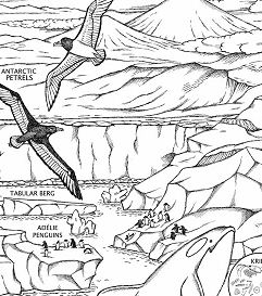 Race To The South Pole Coloring Page
