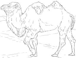 Realistic Bactrian Camel