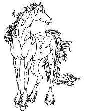 Wild horse 3