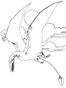 Rhamphorhynchus Jurassic Pterosaurs