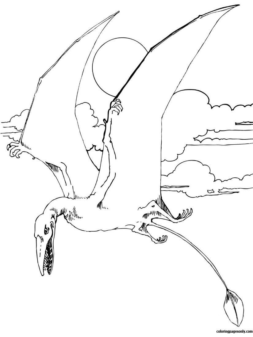 Rhamphorhynchus Jurassic Pterosaurs Coloring Page Free